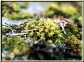 This is a great close-up of Moss.  It will devour your roof if you let it.