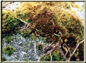 This is another great example of a close-up of Moss.