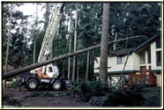 Lifting the tree out of the home without causing additional damage