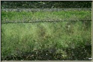 """Before"" photo of a concrete wall with heavy moss growth."