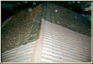 Examples of a Tile roof cleaned vs. uncleaned.
